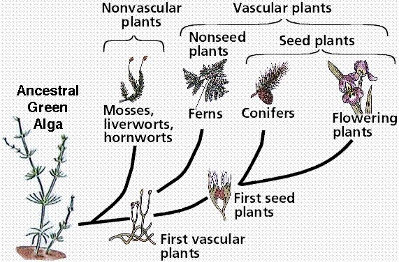 Nonvascular and nonseed vascular plants