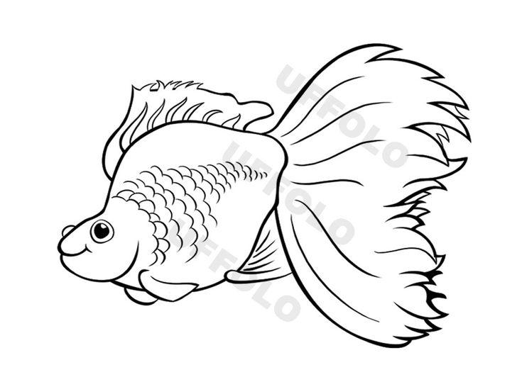 Coloriamo i pesci uffolo disegni da colorare pinterest for Disegni di pesci da colorare e stampare gratis