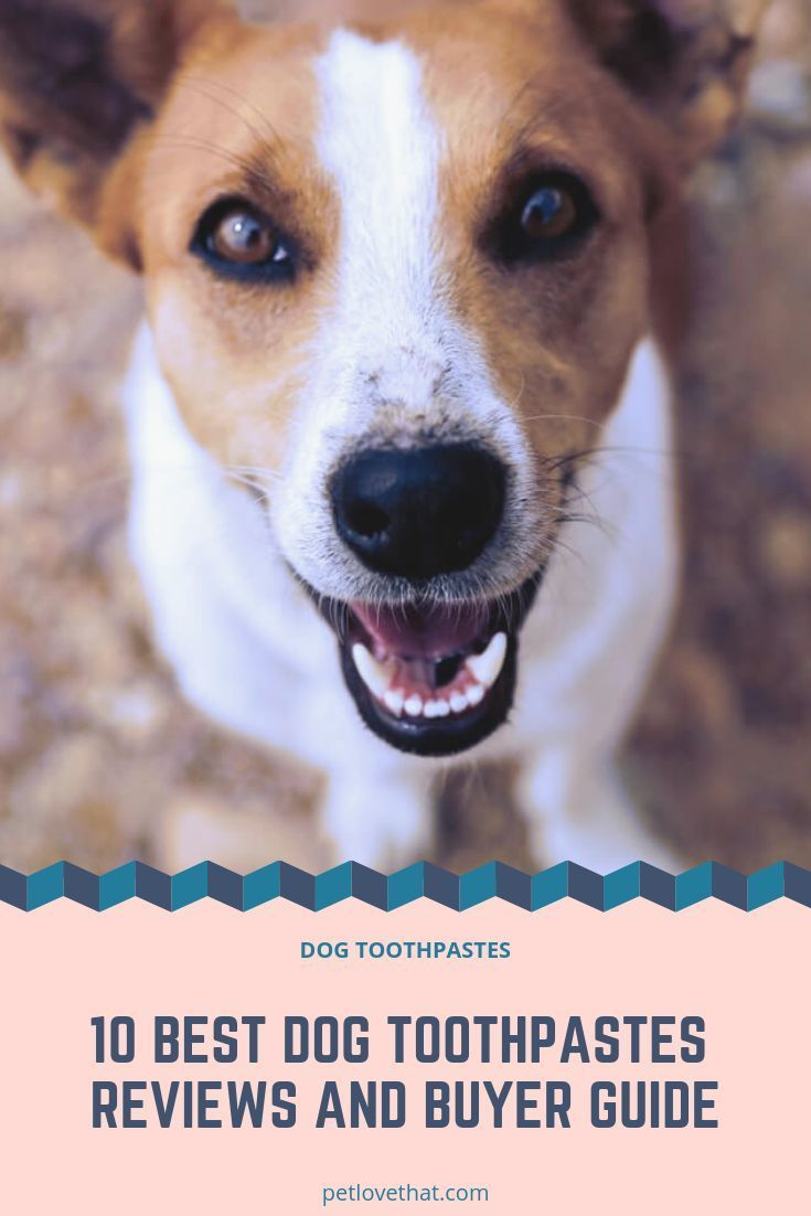 10 Best Dog Toothpastes Reviews And Buyer Guide 2019 Dog Toothpaste Best Dogs