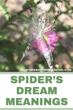 Spider Symbolism to help with dream interpretation. One of the dream meanings for spider is weaving something new, which is why I've had dreamed of spiders in the past.