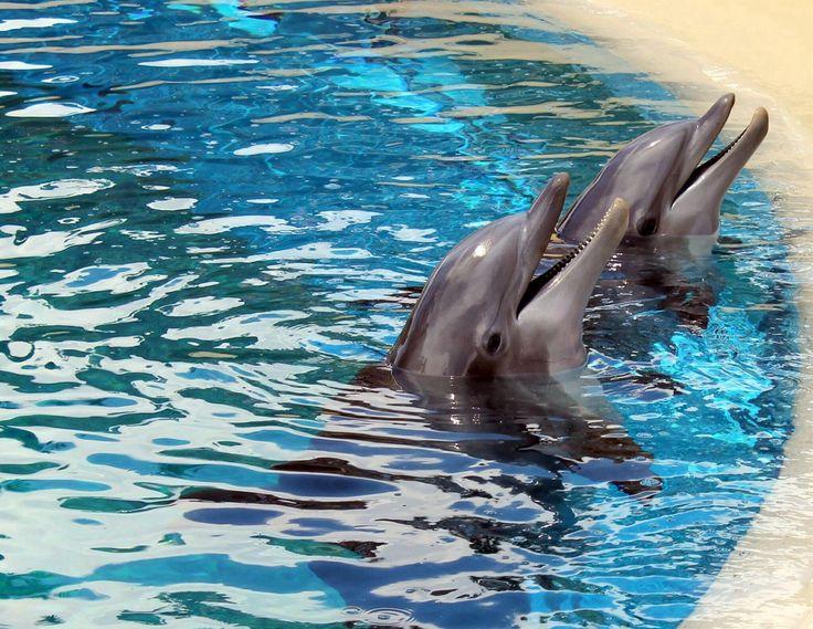 Dolphins - Mirage, Vegas.