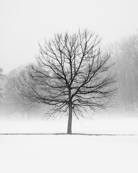 Enchanted forest black and white tree photography print large winter tree landscape art for modern