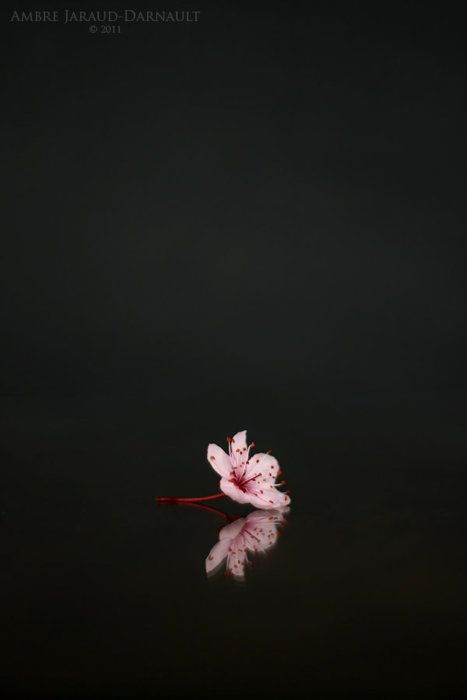 You could spend your whole life searching for the perfect blossom & it would not be a wasted life.