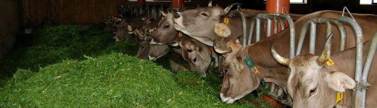 Bauernhof Troy | Boerderijvakantie Bregenzerwald