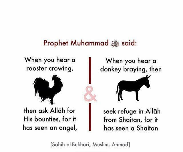 Bukhari, Muslim & Ahmad