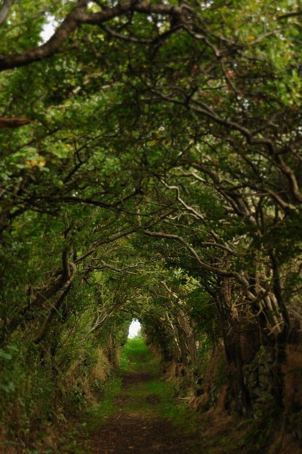 Light at the end of the tunnel... County Antrim, Ireland