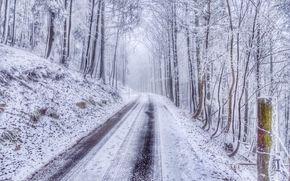 лес, дорога, зима, деревья, пейзаж