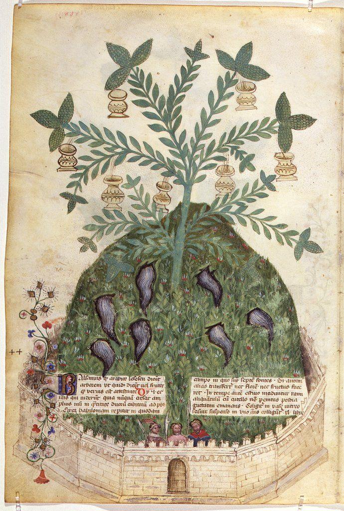 Giovannino et Salomone de Grassi - Historia Plantarum - 1395/1400