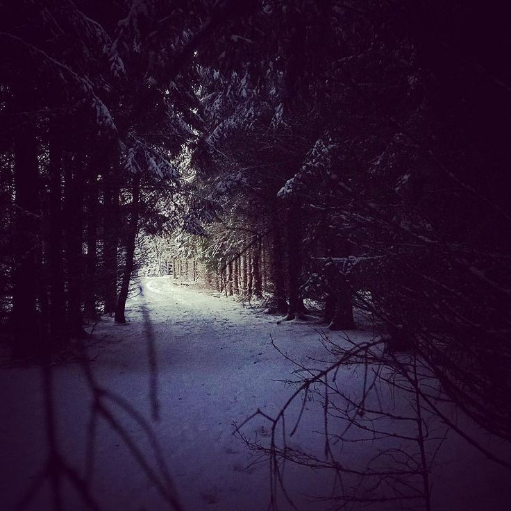 #winter #forest #snow