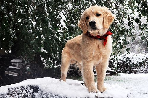 11 Holiday Hazards To Keep Away From Your Pups
