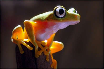 Frog Facts For Kids | Interesting Facts about Frogs For Kids