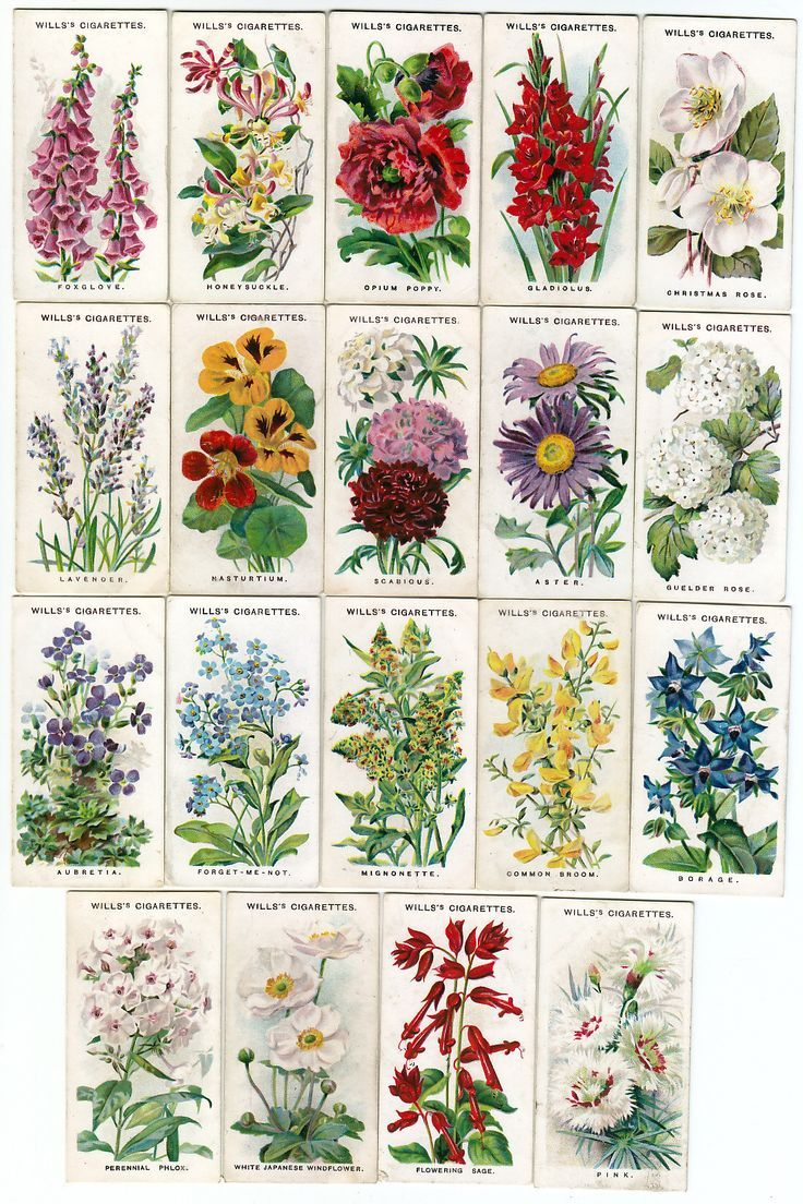 Names and pictures of traditional English Cottage Garden