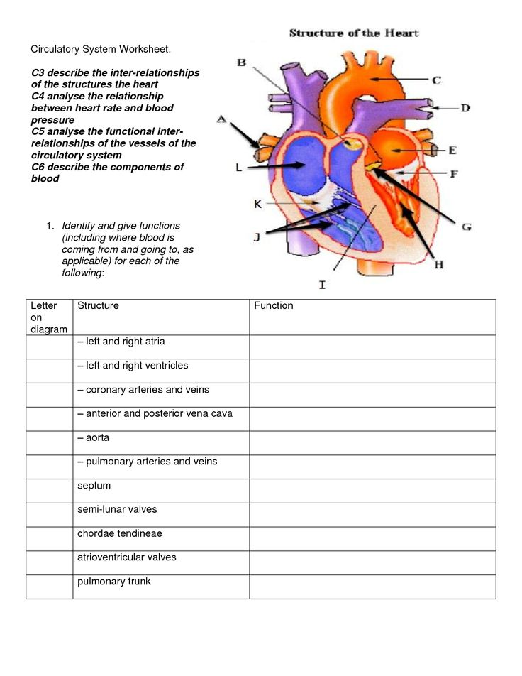 Printables Circulatory System Worksheet 1000 ideas about circulatory system on pinterest body systems human and science