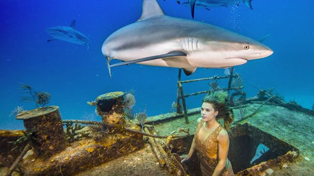 Model Swims With Sharks