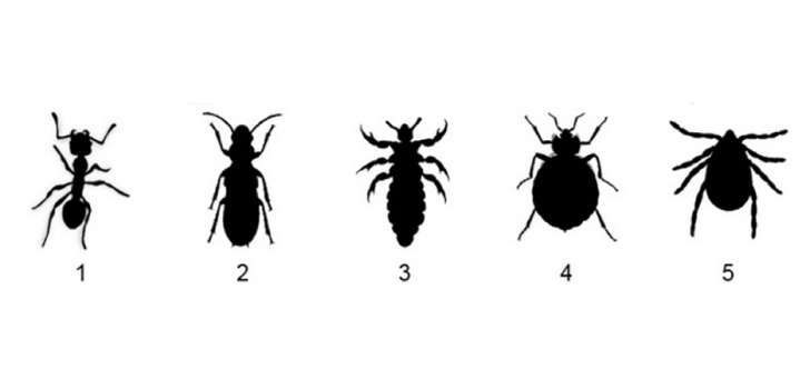 Do You Know What A Bedbug Looks Like Many Hotel Patrons Don T