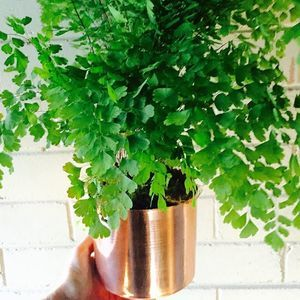 {hire me} 24 of these gorgeous little maiden hair ferns in copper pots going out this weekend for a stunning wedding..  Lush & organic table styling  #weddings #weddingstyling #northshorewedding