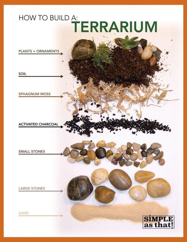 Learn how to build an indoor terrarium on Simple As That, with host Andrea Keesee. #Terrarium…