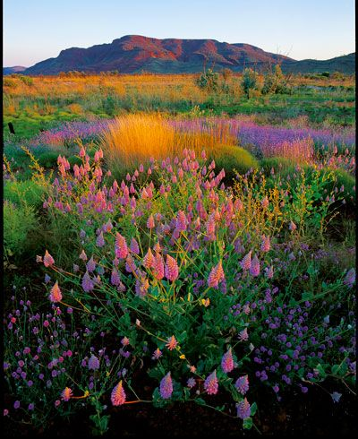 Western Australia's wildflower country.
