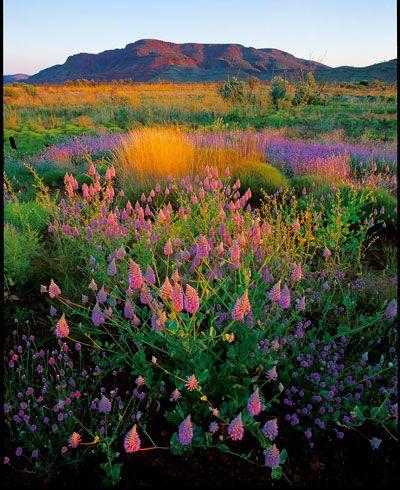 Western Australia's wildflower country.