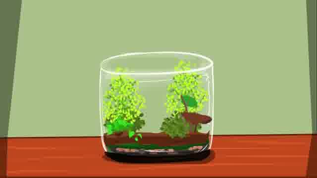 Image titled Make a Terrarium Step 9 preview