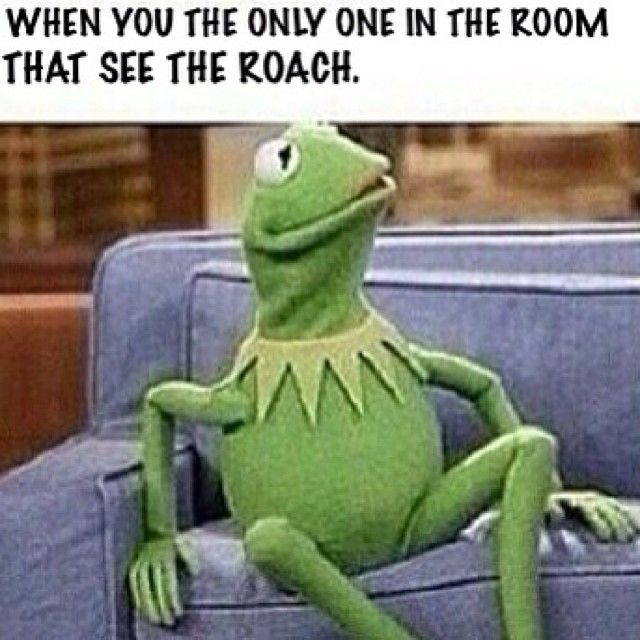 Top 20 Funniest Kermit The Frog Memes - NoWayGirl Yes.