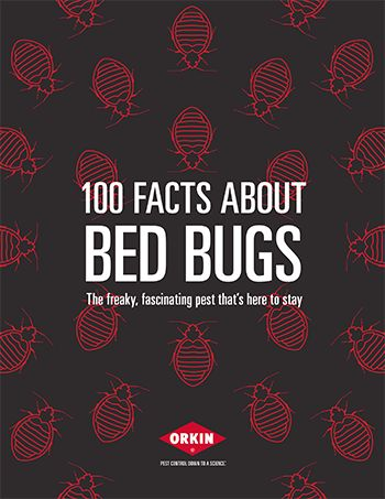 13 best bed bugs images on pinterest bed bugs diy pest control 100 facts about bed bugs solutioingenieria Images