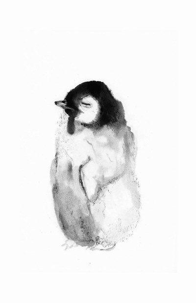 Penguin chick - My White Room