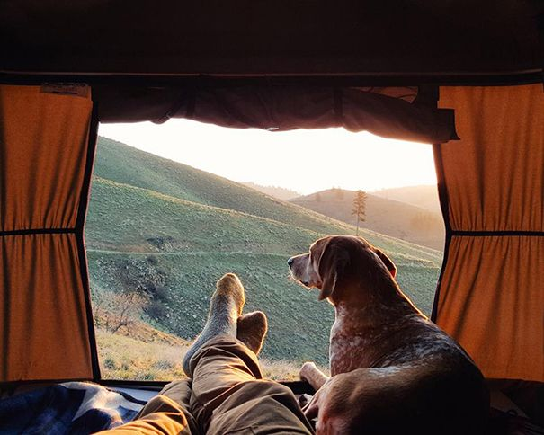 Camping With Dogs Instagram Will Inspire You To Go Hiking With Your Dog