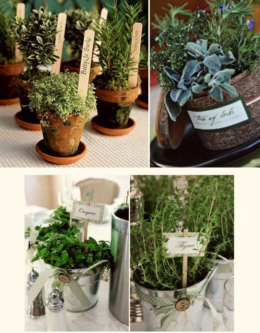 Petits pots de thym romarin sauge et autres vari t s en - Fines herbes en pot interieur ...