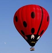 Hot air Lady Bug Balloon....: Flying, Bugs Hot, Ladybugs Balloon, Air Ballon, Beautiful Balloon, Ladybugs Stuff, Hot Air Balloons, Hot Balloon, Lady Bugs