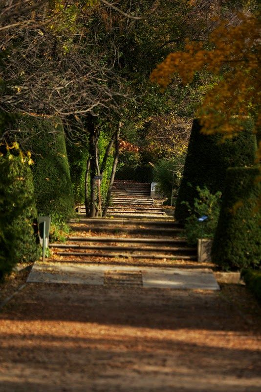 Las 25 mejores ideas sobre jardin botanico en pinterest for Jardin botanico madrid horario