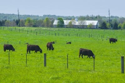 UK to host two farm fencing schools | UK College of Agriculture News