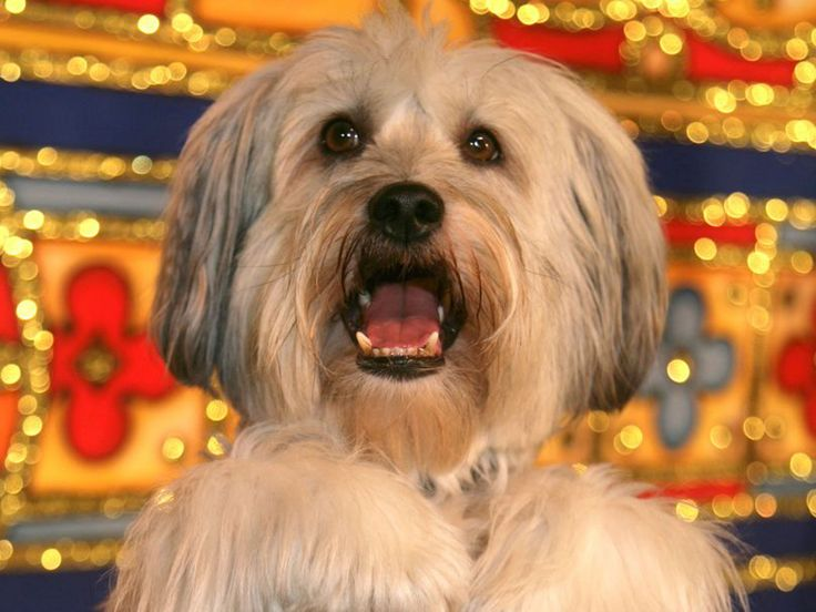 Britain's Got Talent winner Pudsey the dog has died