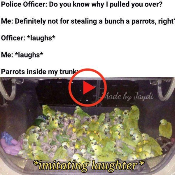 28 Funny Pictures You Laugh You Lose Simple Funny Pictures Memes Laugh