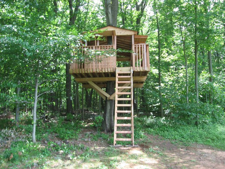 basic tree house pictures. Simple Tree House | 973-255-7476 Basic Pictures W