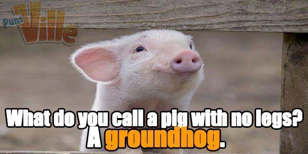 Pig Puns