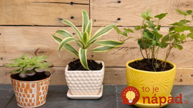 3 jednoduché triky pre vaše izbové rastliny od skúsených pestovateľov!