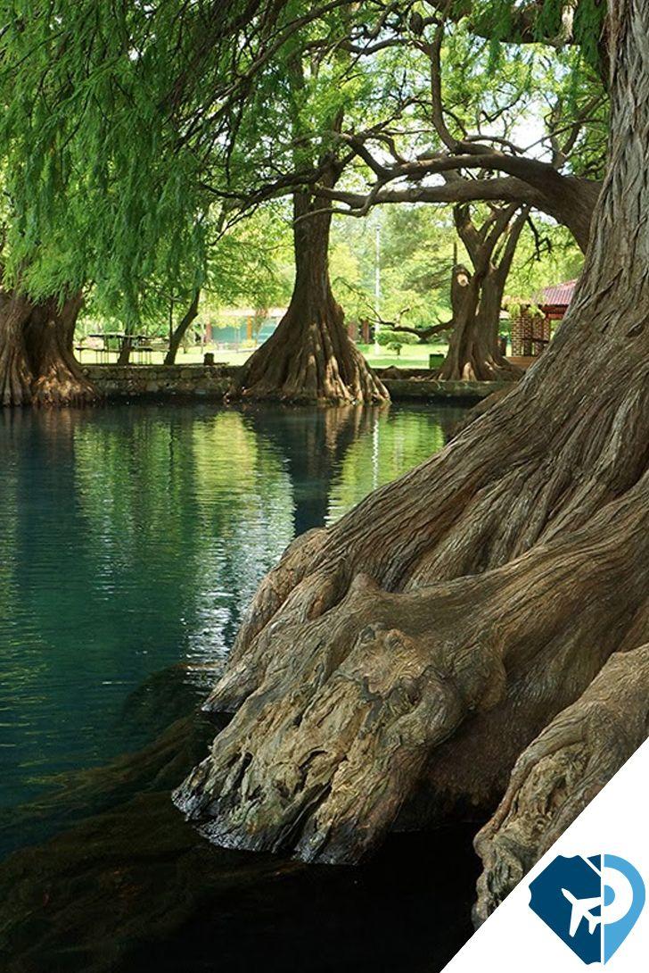 """El Lago de Camécuaro en Michoacán, es un lago natural formado por nacimientos de agua que borbotean de entre los árboles, Camécuaro en lengua purépecha o tarasca significa """"lugar del baño""""."""