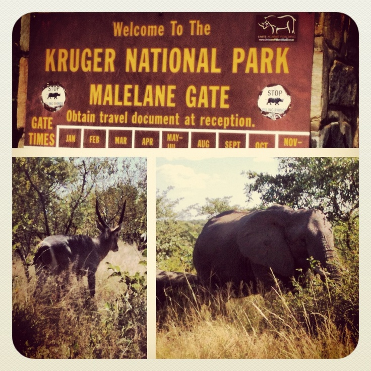 Kruger National Park  is one of the largest game reserves in Africa. It covers an area of 19,485 square kilometres (7,523 sq mi) in the provinces of Limpopo and Mpumalanga in northeastern South Africa, and extends 360 kilometres (220 mi) from north to south and 65 kilometres (40 mi) from east to west. Areas of the park were first protected by the government of the South African Republic in 1898, and it became South Africa's first national park in 1926.