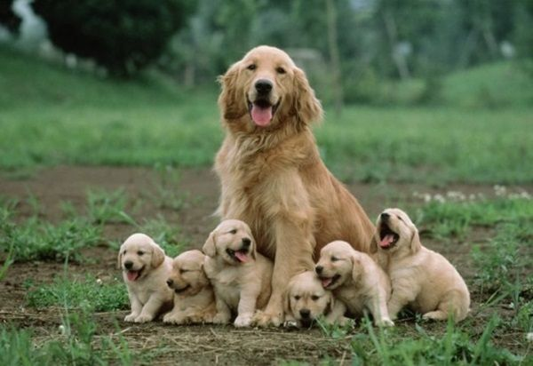 40 Amazing Pictures of Big Dogs with Their Small Puppies