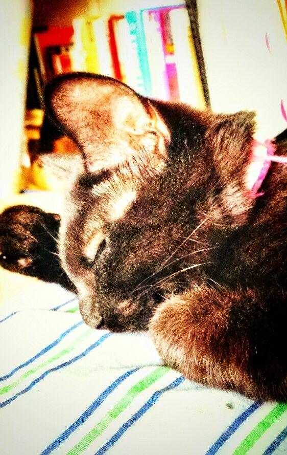 Sleeping Charlie #kitten #lazyafternoon