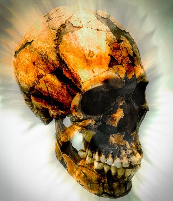Pascal Picq, paléoanthropologue, nous propose une fable : et si une femme de Néandertal, issue de clonage, découvrait notre monde de 2014...