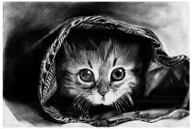 Image result for pencil portraits of cats