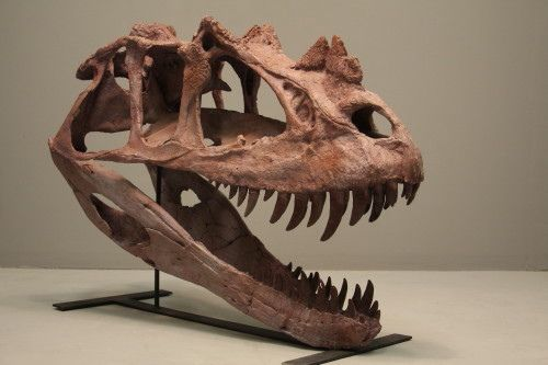 #Ceratosaurus #dinosaur
