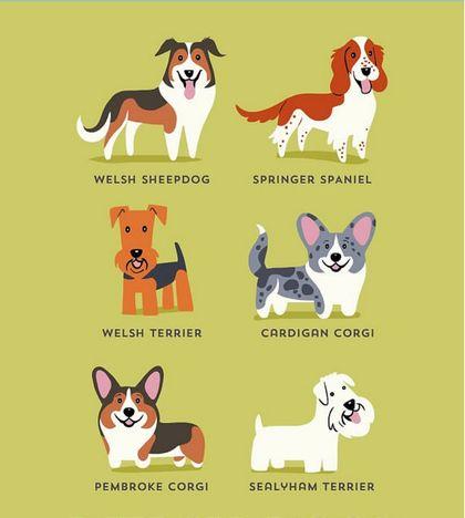 Perros Ingleses. Perros Asiáticos. Perros Franceses. Perros Irlandeses. Perros Canadienses. Perros del Mediterráneo. Perros Latino Americanos. Perros Alemanes. Perros Estadounidenses. Perros Nórdicos. Perros Galeses. Perros Australianos. Perros... - FranNallino