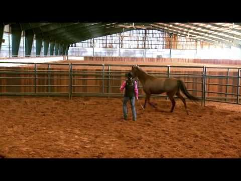 Does your horse have bucking problems? - YouTube
