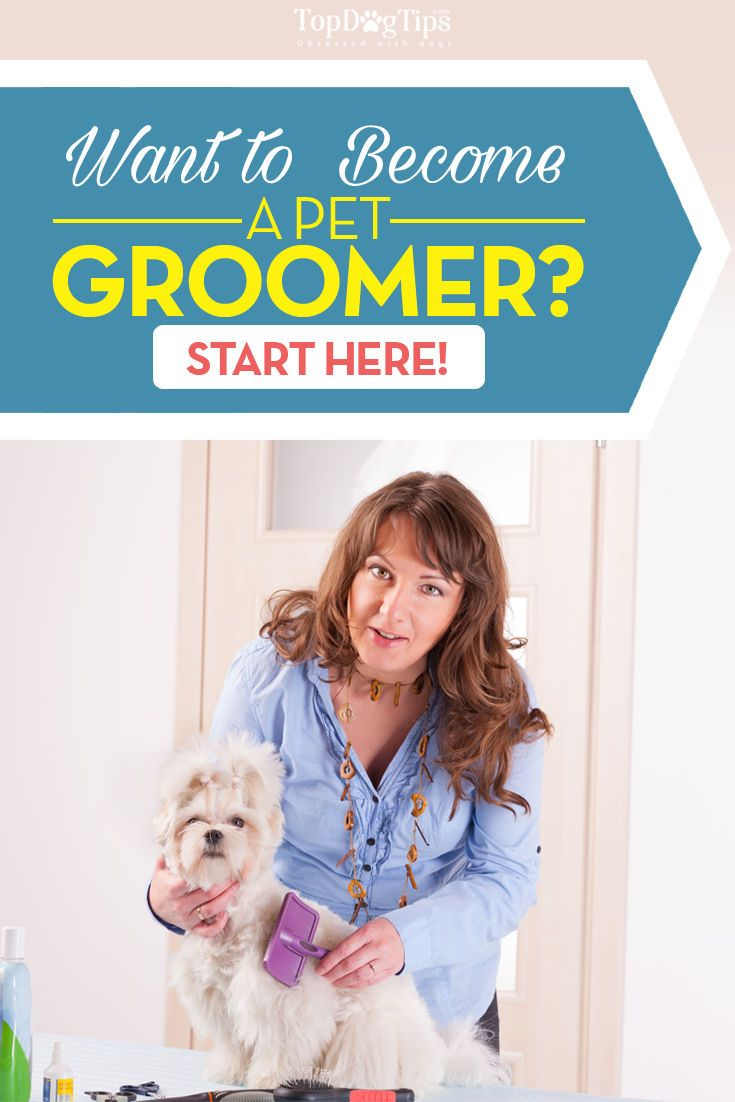 where to begin your career as a pet groomer its a good time to stock up for the coming months purchase inexpensive items for an animal shelter - Jobs With Animals Best Jobs Working With Animals