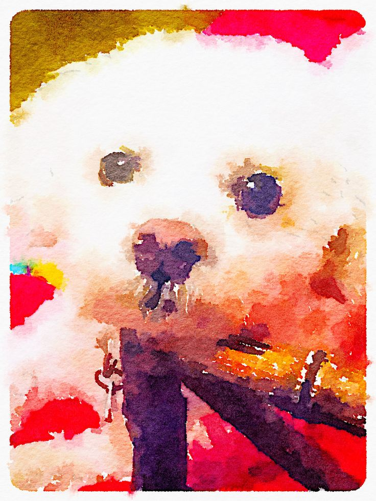 Water Colors White dogs, Digital prints, Colorful pictures