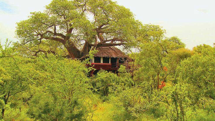 Life up in the trees... (Tarangire Treetops, Elewana Collection)