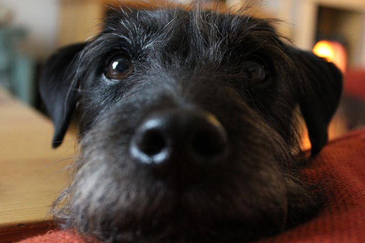 My dog, a Patterdale Terrier, Pepper, because he's black :-)  Who is always good for a cuddle when my brain's pondering over where to take a scene next. He's a lovely, soppy, dog, with pure brown eyes. Totally unlike a naturally tempered Patterdale, apart from his tendency towards over excitement. Love that dog.